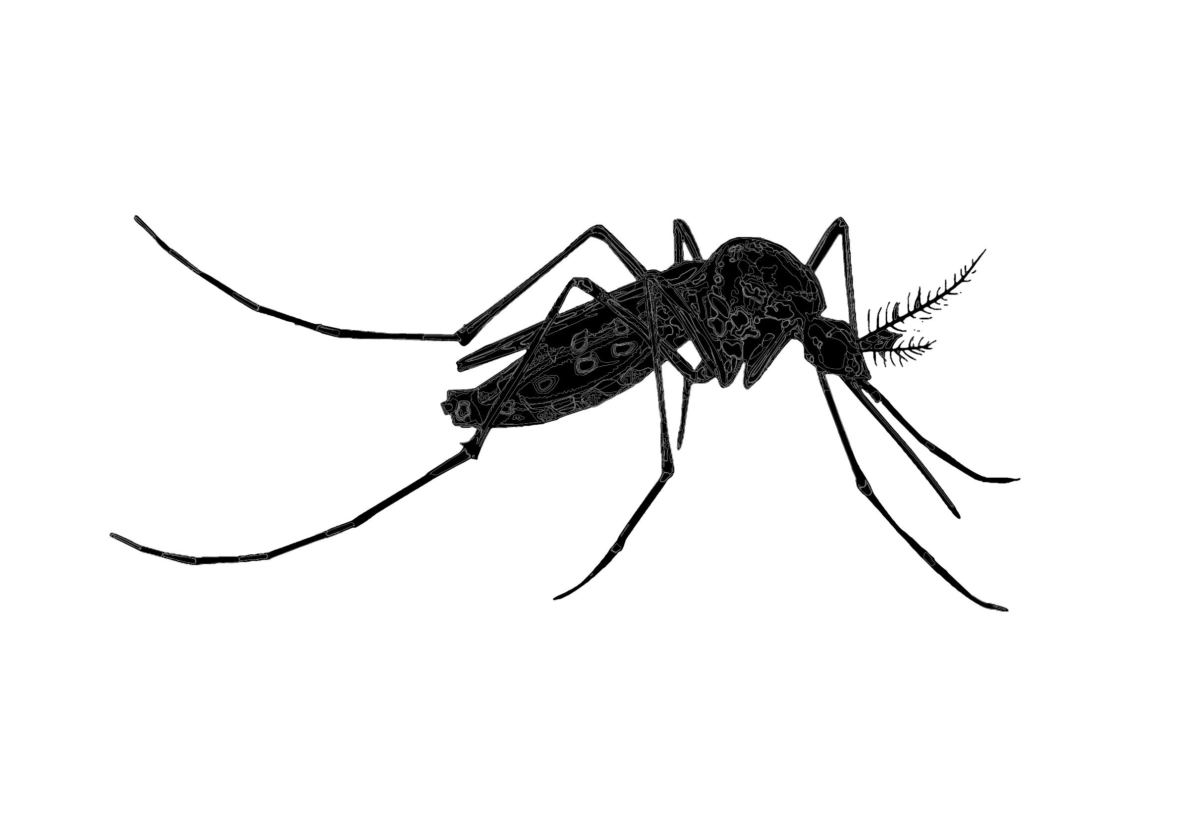 Прозирна позадина комараца # 1523657
