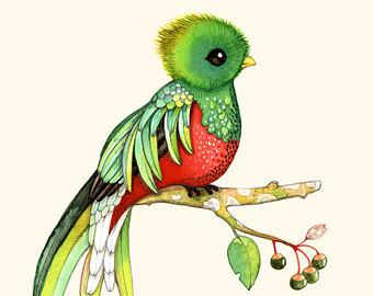 Samling af søde Quetzal Cliparts (35)